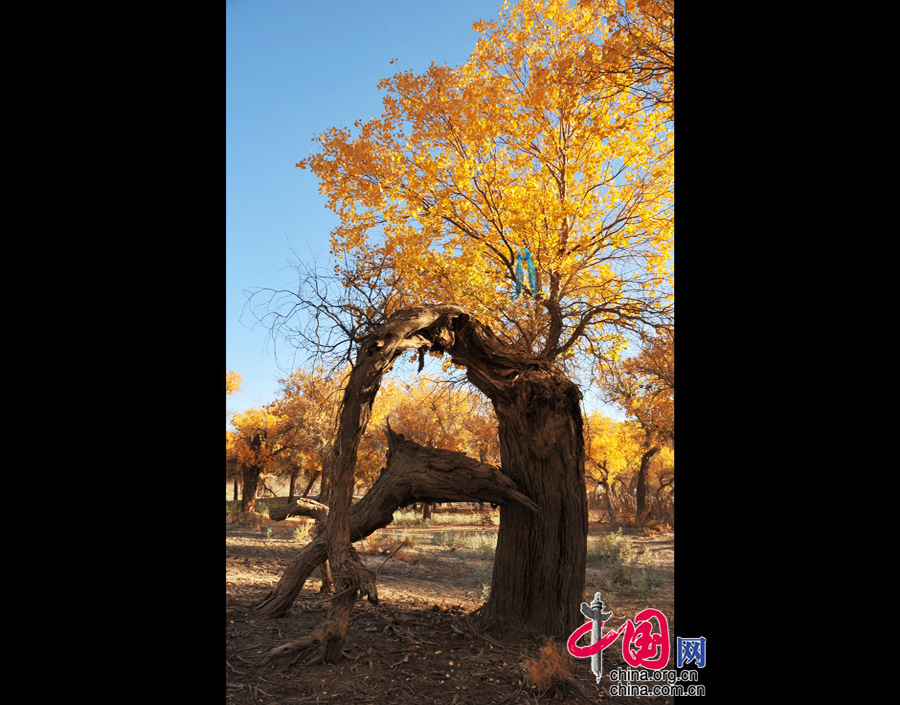 ejin qi dating site The ejin river , also known as the heihe river , is a major river system that originates on the northern side of the qilian shan mountains in gansu province the river is around.