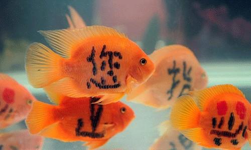 Natur und umwelt t towierte for Aquarium goldfische