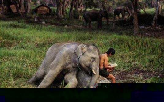 natur und umwelt lustige fotos von elefanten. Black Bedroom Furniture Sets. Home Design Ideas