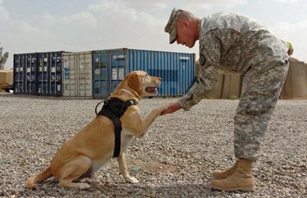 Military Name Of Dog Handlers