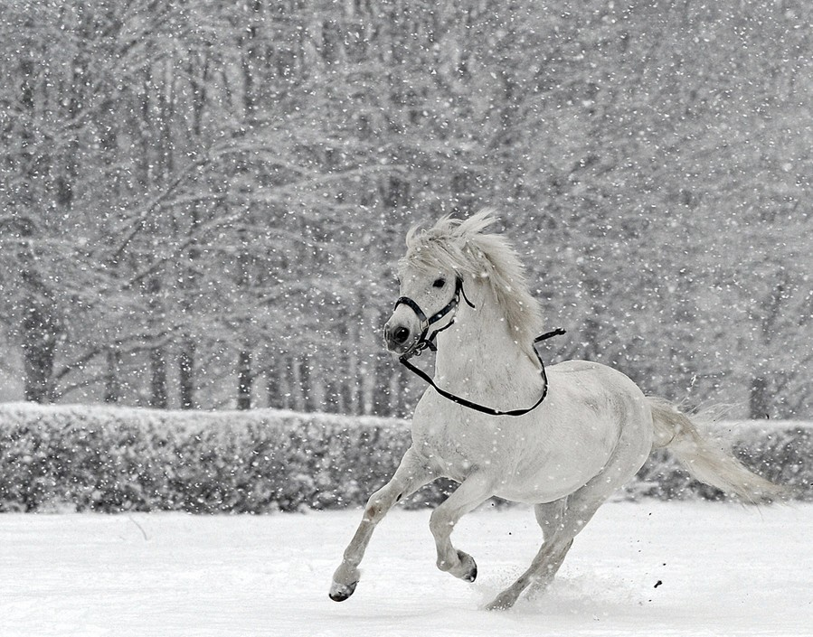 Фото и картинки лошадей лучшее