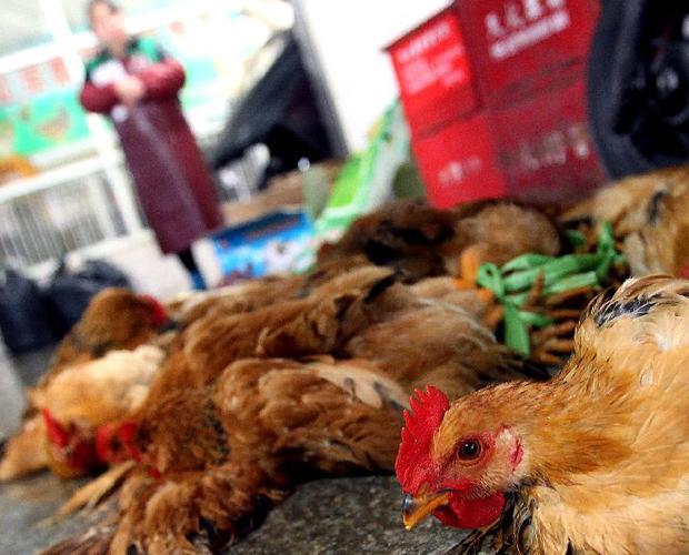 Bei einem sieben Jahre alten Mädchen in Beijing ist eine Infektion mit dem H7N9-Vogelgrippe-Erreger diagnostiziert worden – der erste Fall in der Hauptstadt, wie die Beijinger Gesundheitsbehörden am Samstag bekannt gaben.