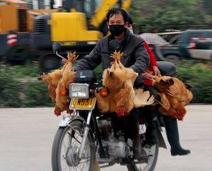 Wegen Vogelgrippe: Niedrige Geflügelpreise führen zu K?uferansturm