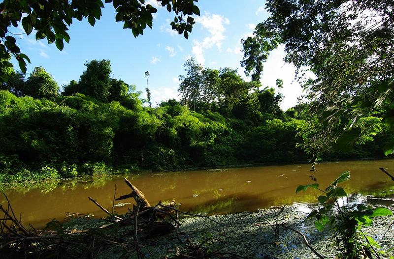 В джунглях Амазонки самое большое разнообразие растений и животных на