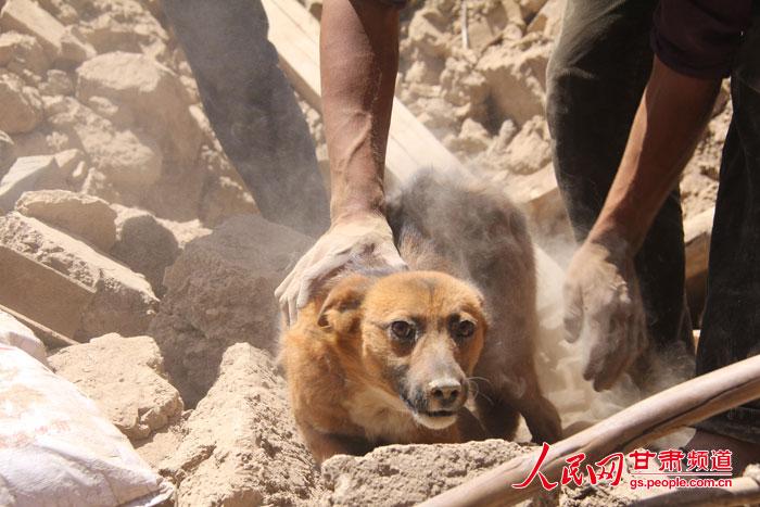 Welche Hunderasse in der Stadt? Hund - gutefragenet