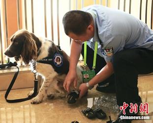 Interessante Fotos: Spürhunde beim Bo'ao Forum tragen Schuhe