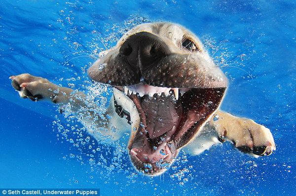 Kultur - german.china.org.cn - Fotografie: Süße Hunde unter Wasser: german.china.org.cn/culture/txt/2014-09/19/content_33559218_5.htm