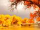 Die besten Herbst-Reiseziele in China