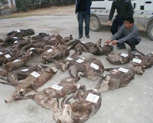 Der illegale Handel mit Wildtieren breitet sich laut dem Bericht einer Tierschutzorganisation rasant im Internet aus. China sei demnach weltwei auch das führende Land beim Onlinehandel von Wildtieren. Alleine in diesem Jahr seien in dem Land 2106 Transaktionen beobachtet worden.