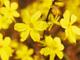 Eine Blumenreise durch vier Jahreszeiten in China