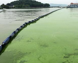 In den vergangenen Tagen war der Taihu-See großflächig von Cyanobakterien bedeckt. Die zuständige Behörde sperrte die kontaminierte Wasseroberfläche bereits ab.