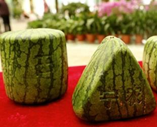 """Am Samstag wurde eine ungewöhnliche """"Wassermelonen-Versammlung"""" in einem Supermarktder in der ostchinesischen Provinz Jiangsu abgehalten. Teilnehmer waren Melonen in Formen von Herzen, Pyramiden, Würfeln, oder Säulen…"""