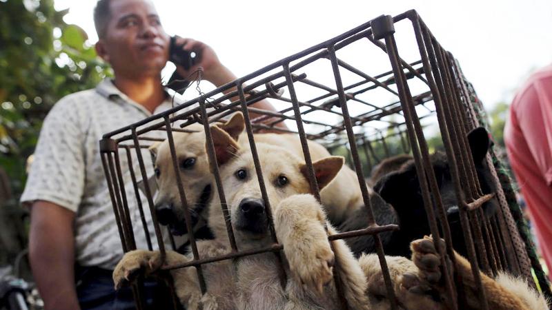 """每年6月,广西省玉林市的""""荔枝狗肉节""""都会在夏至那天如期举行。夏至是农历二十四节气之一,当天北半球的日照时间为全年最长。不过,大家到底是如何看待吃狗肉一事呢?"""