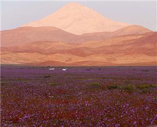 Die Atacamawüste in Chile ist die trockenste Wüste der Welt. Aber das Wetterphänomen El Niño im Jahr 2015 hat heftige Niederschläge gebracht.