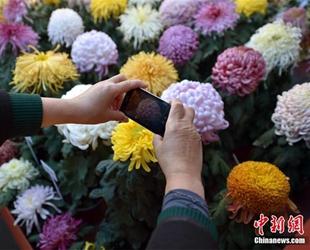 Bunte Chrysanthemen-Ausstellung in Beijing