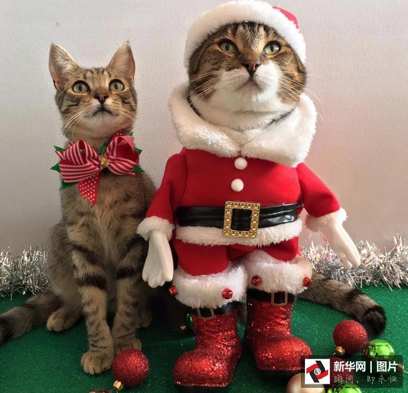 Süßer geht nicht: Tiere feiern Weihnachten!_China.org.cn