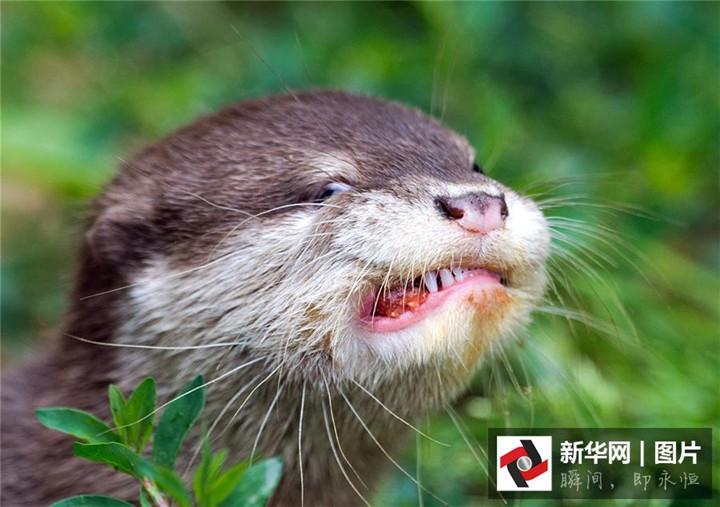 Bilder von 2015: die reiche Gefühlswelt der Tiere_China.org.cn