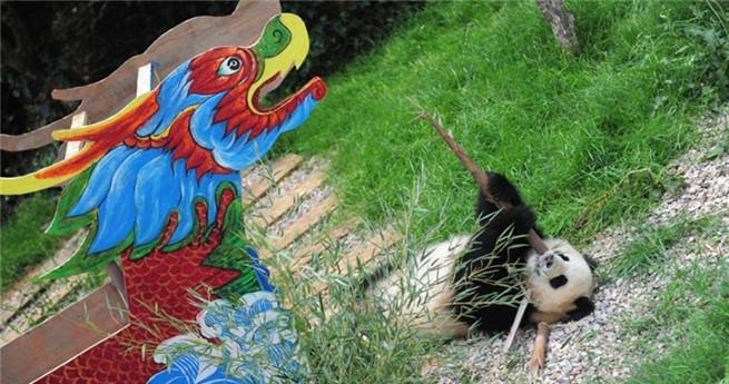 Pandas in Kunming empfangen das Drachenbootfest