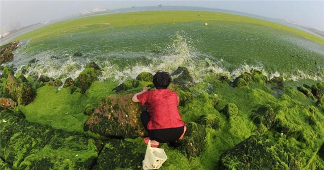 Ostchinesische Bucht von Algenpest bedroht