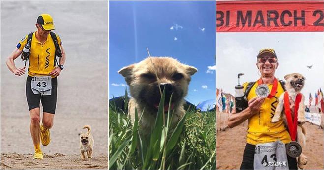 Chinesischer Straßenhund folgt ausländischem Marathonläufer 125 Kilometer