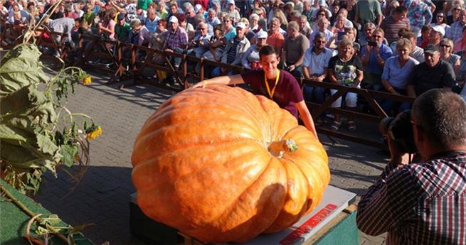 763 Kilogramm schwerer Kürbiskönig in Deutschland gekürt