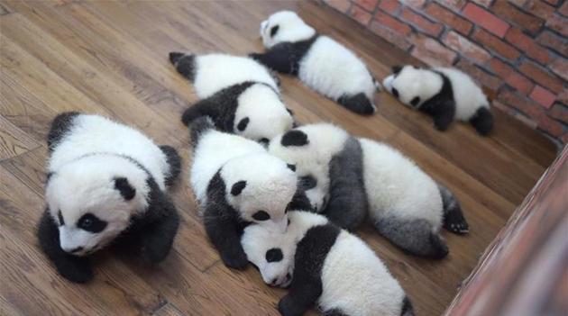 Pandakindergarten in Südwestchina