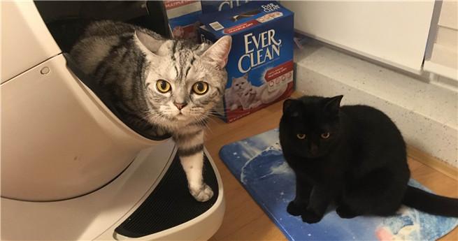 Vivienne und ihre zwei Katzen