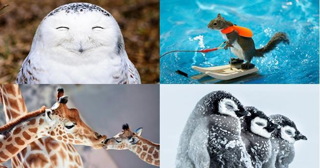 Die 20 besten Tierfotos aus 2016