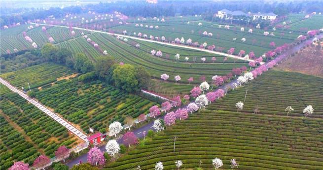 Aus der Vogelperspektive: Teegarten mit farbigen Blumen als Verzierung