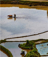 Youyang-Terrassen in Chongqing spiegeln Schönheit der Natur wider