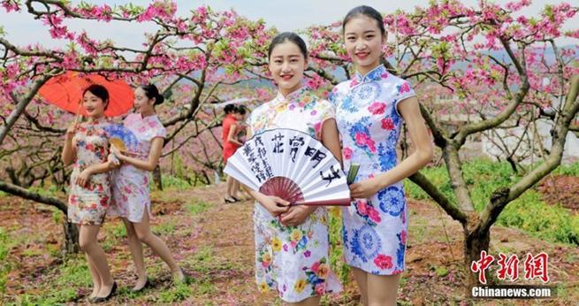 Cheongsam-Schau inmitten von Pfirsichblüten