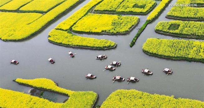Jiangsu: Touristen genie?en Rapsblütenlandschaft vom Boot aus