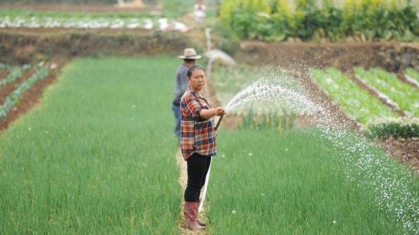 Landwirte pflanzen zum Guyu nach dem Lunisolarkalender