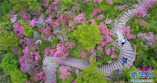 Touristen bewundern Azaleenblüten in Hubei in Zentralchina