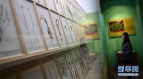 Chinesisches Museum der tibetischen Medizinkultur