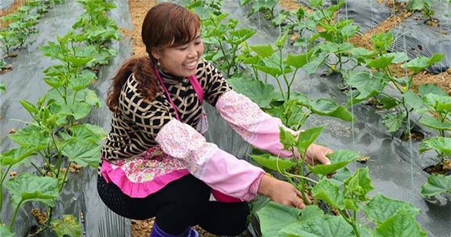 Landwirte in Südwestchina profitieren von Bemühungen zur Armutsbekämpfung