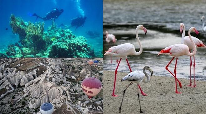 biologischen Vielfalt internationaler Tag