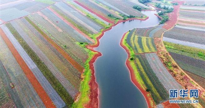 Das Meer der Ananas in Guangdong
