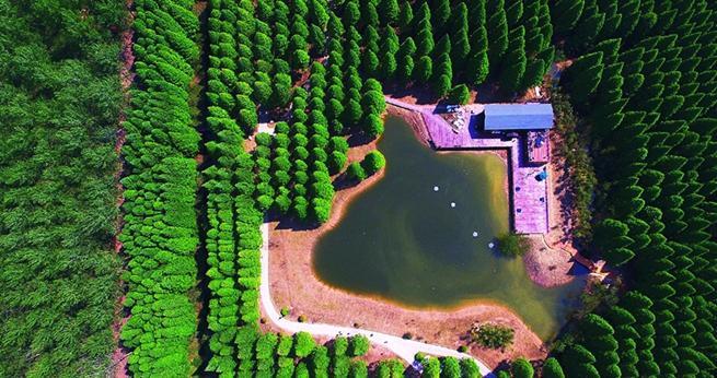 Der Huanghai-Waldpark aus der Vogelperspektive