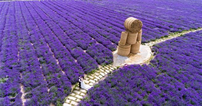 Xinjiang: Lavendelmeer im Ili-Tal