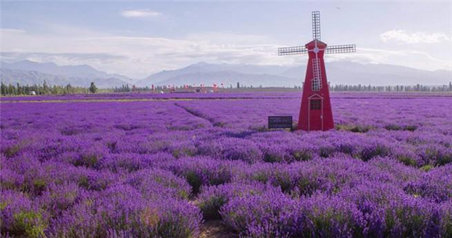 7. Internationales Lavendel-Tourismusfest in Ili eröffnet
