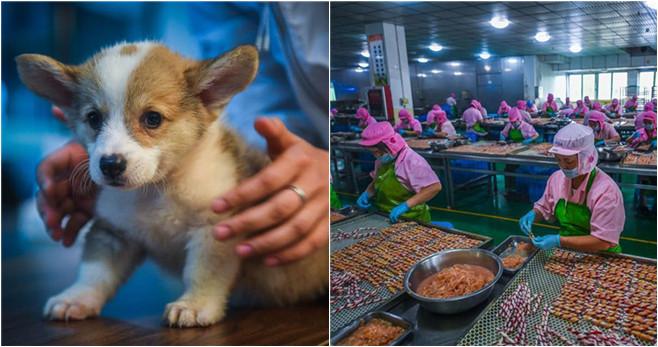 Output von Heimtierbranche im ostchinesischen Pingyang erreichte 2016 drei Billionen Yuan