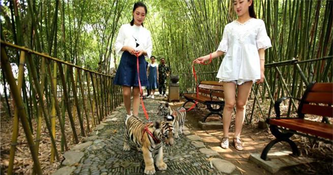 Spazieren mit Tigern
