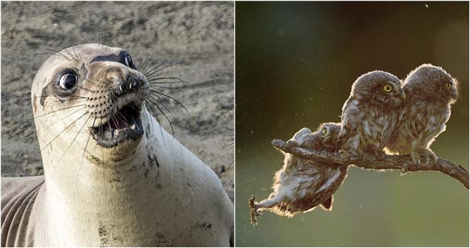 Auch Tiere könnten humorvoll sein