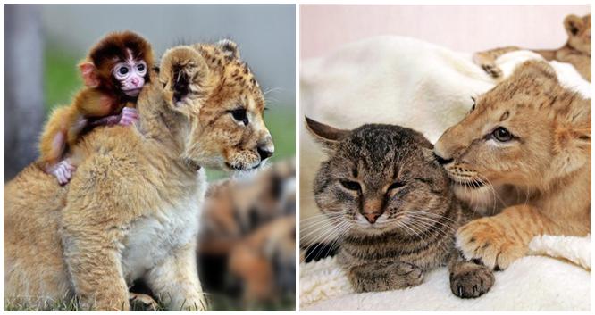 """Unglaubliche """"Freundschaften"""" in der Tierwelt"""