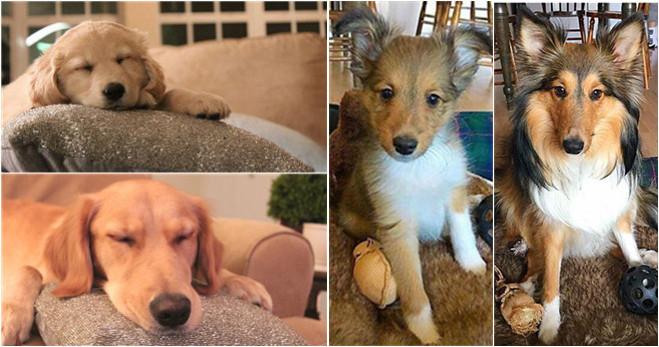 Die Entwicklung der Haustiere: von flausigen Kugeln zu zierlichen Schönheiten