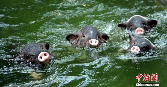 Lustig: Wie die Tiere den hei?en Sommer verbringen