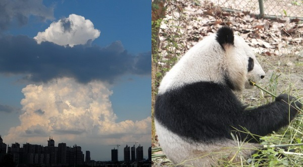 Naturspektakel: Panda-Wolken am Himmel gesichtet