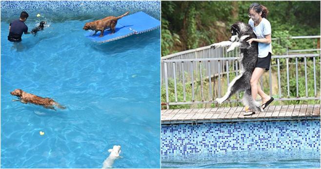 Hundeliebhaber baut 2.000 Quadratmeter großes Schwimmbecken für Hunde