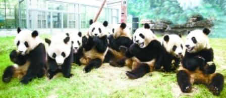 北京動物園 の「五輪パンダ ...